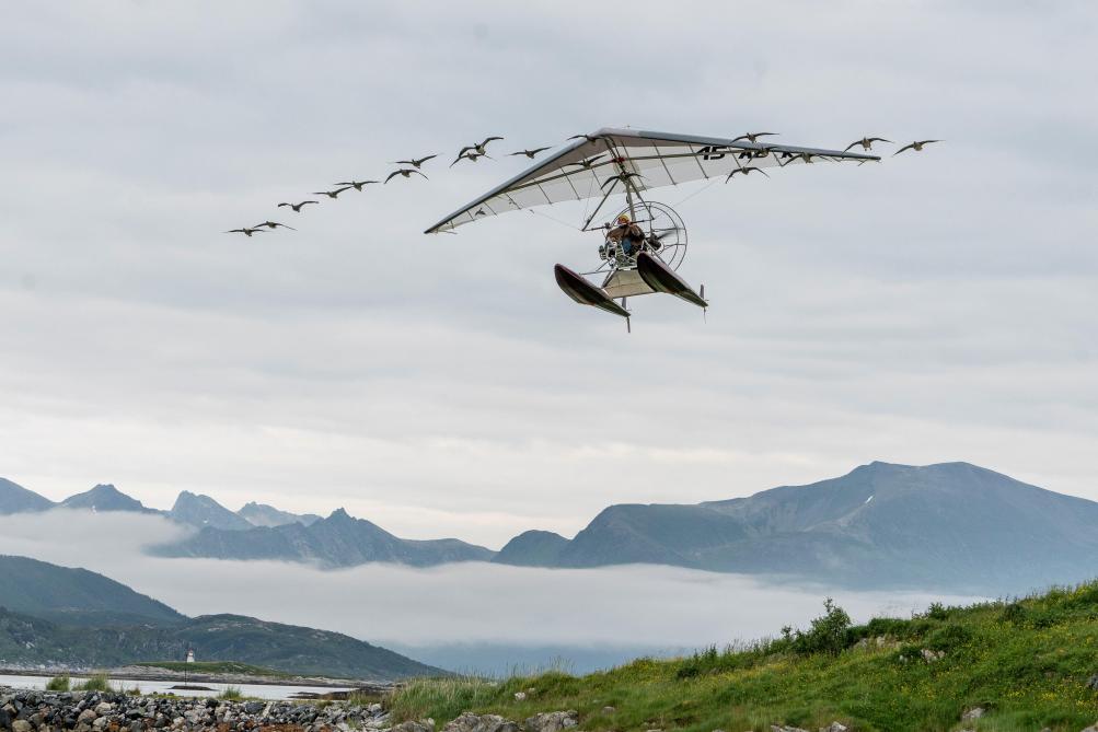Les élèves de 6e et de 5eC volent avec les oies sauvages